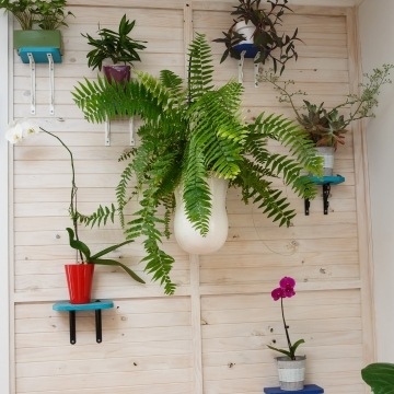 Indoor Plant Hire--